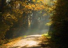 Het bos en de zonnestraal van de herfst stock fotografie