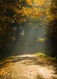 Het bos en de zonnestraal van de herfst stock afbeeldingen