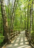 Het bos houten landschap van de brugweg op een zonnige dag van de de lentezomer met gras levende bomen en groene bladeren bij tak stock foto