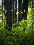 Het bos Leven Royalty-vrije Stock Afbeeldingen