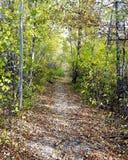 Het bos lopen royalty-vrije stock afbeelding