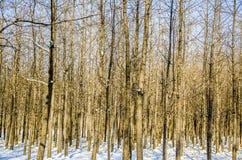 Het Bos met Sneeuw Royalty-vrije Stock Foto's