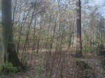 Het bos is mooi royalty-vrije stock afbeelding