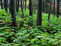 In het bos na de regen stock foto's