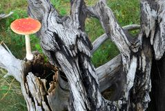 Het bos nog-leven 3 Stock Foto's