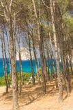 Het bos op costline Masua Stock Foto