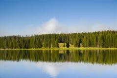 Het bos refecting op water Stock Afbeelding