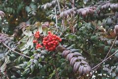 Het bos stort met kleurrijke bessen stock fotografie