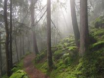 Het bos van Ahrntal Stock Afbeelding