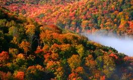 Het bos van Allegheny royalty-vrije stock foto's