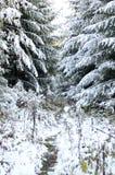 Het bos van Altay Royalty-vrije Stock Afbeeldingen