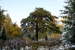 Het bos van Altay Royalty-vrije Stock Afbeelding