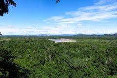 Het bos van Amazonië Stock Afbeeldingen