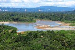 Het bos van Amazonië Stock Foto's