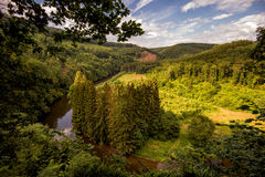 Het Bos van Ardennen Royalty-vrije Stock Afbeeldingen