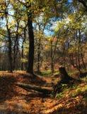 Het bos van Autmn Royalty-vrije Stock Afbeelding