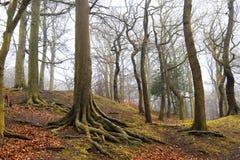Het bos van Autum Royalty-vrije Stock Afbeeldingen