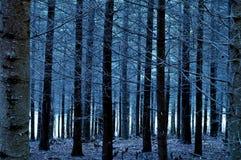 Het Bos van blauw Stock Afbeeldingen