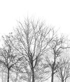 Het bos van het boomsilhouet op witte achtergrond royalty-vrije stock fotografie