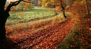 Het bos van Colorul royalty-vrije stock foto