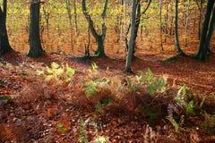 Het bos van Colorul stock foto's
