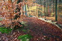 Het bos van Colorul stock afbeeldingen