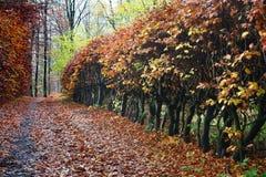Het bos van Colorul royalty-vrije stock foto's
