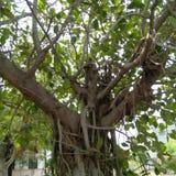 Het bos van de aardboom Stock Foto's