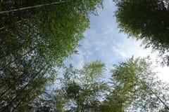 Het bos van de bamboeboom royalty-vrije stock afbeelding