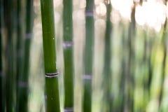 Het bos van de bamboeboom stock fotografie