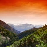Het bos van de berg stock foto's
