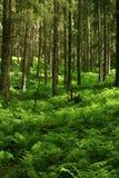 Het bos van de berg Stock Afbeelding