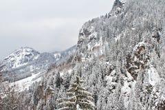 Het bos van de berg dat in sneeuw wordt behandeld Royalty-vrije Stock Foto's