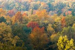 Het bos van de berg in de herfst Stock Afbeelding