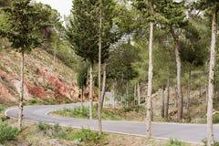 Het bos van de bergweg Stock Foto's