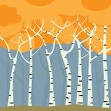 Het bos van de berk stock illustratie