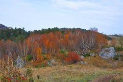 Het bos van de berk in de herfst De Kaukasus, Rusland Stock Afbeeldingen