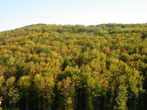 Het bos van de berkberg in de Herfst royalty-vrije stock foto