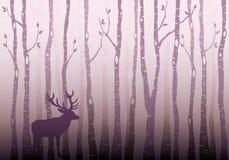 Het bos van de berkboom, vector vector illustratie