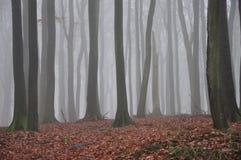 Het bos van de beuk stock afbeelding