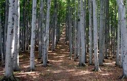 Het bos van de beuk royalty-vrije stock foto