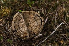Het bos van de boomstomp Stock Foto's
