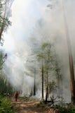 Het bos van de brand Royalty-vrije Stock Foto