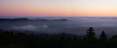 Het Bos van de Californische sequoia bij Nacht Stock Foto