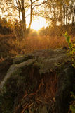 Het Bos van de Cannockjacht Stock Afbeelding