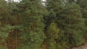 Het bos van de Cannockjacht, het Verenigd Koninkrijk stock footage