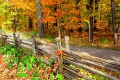 Het bos van de daling Stock Afbeeldingen