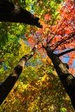 Het bos van de daling Royalty-vrije Stock Foto