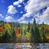 Het bos van de daling in zonneschijn stock foto's