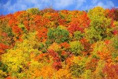 Het bos van de dalingskleur Stock Foto's
